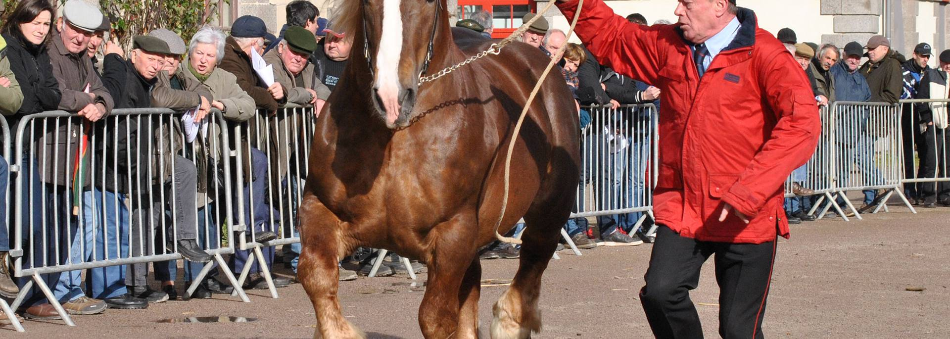 Spectacle cheval haras national de Lamballe
