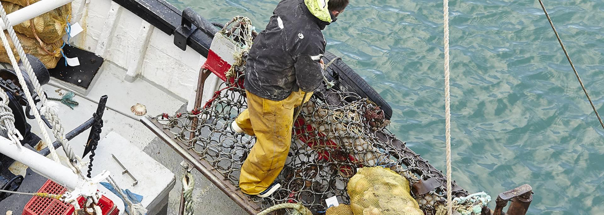 Pêche à la coquille saint jacques