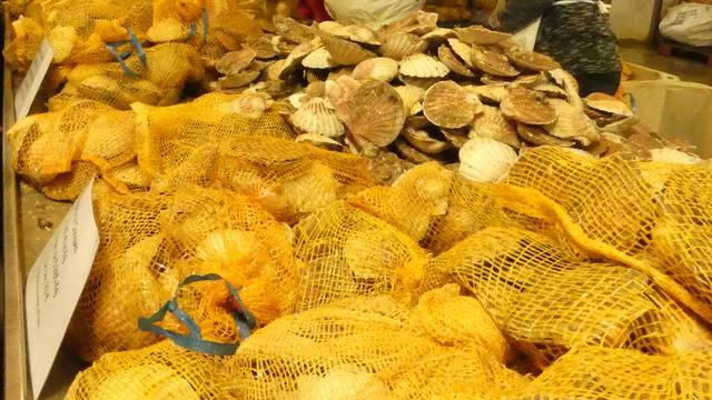 vente de coquille saint jacques