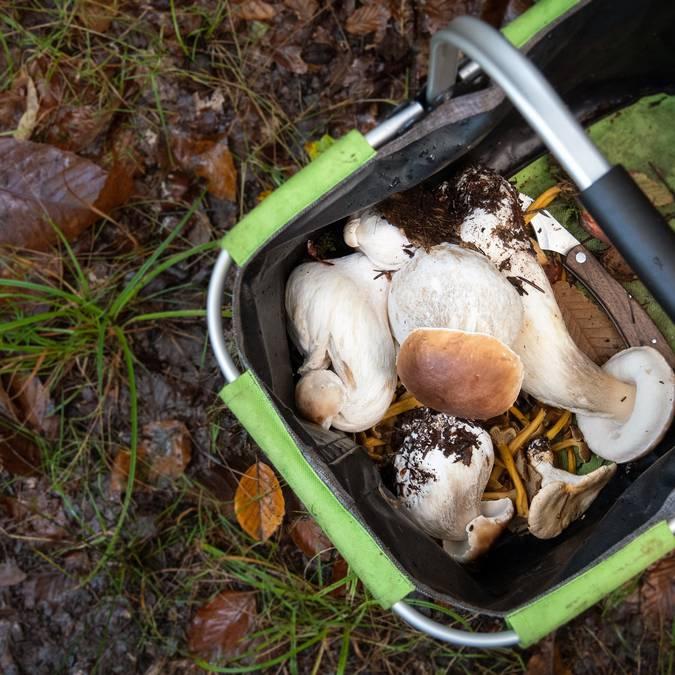 Un panier de champignons